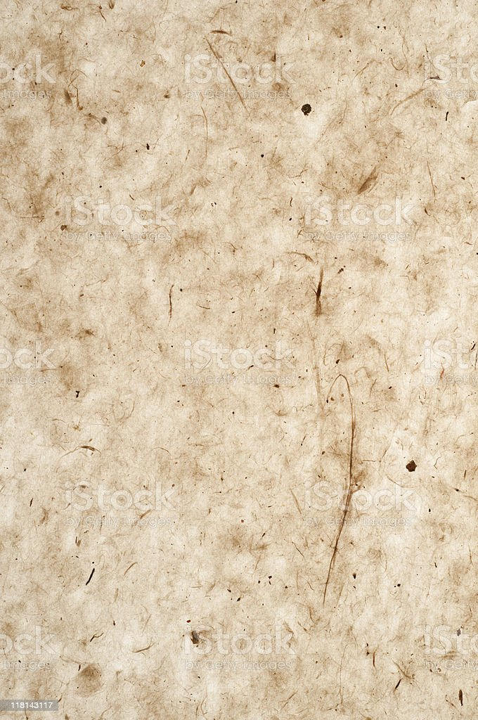 Bark Paper Background stock photo