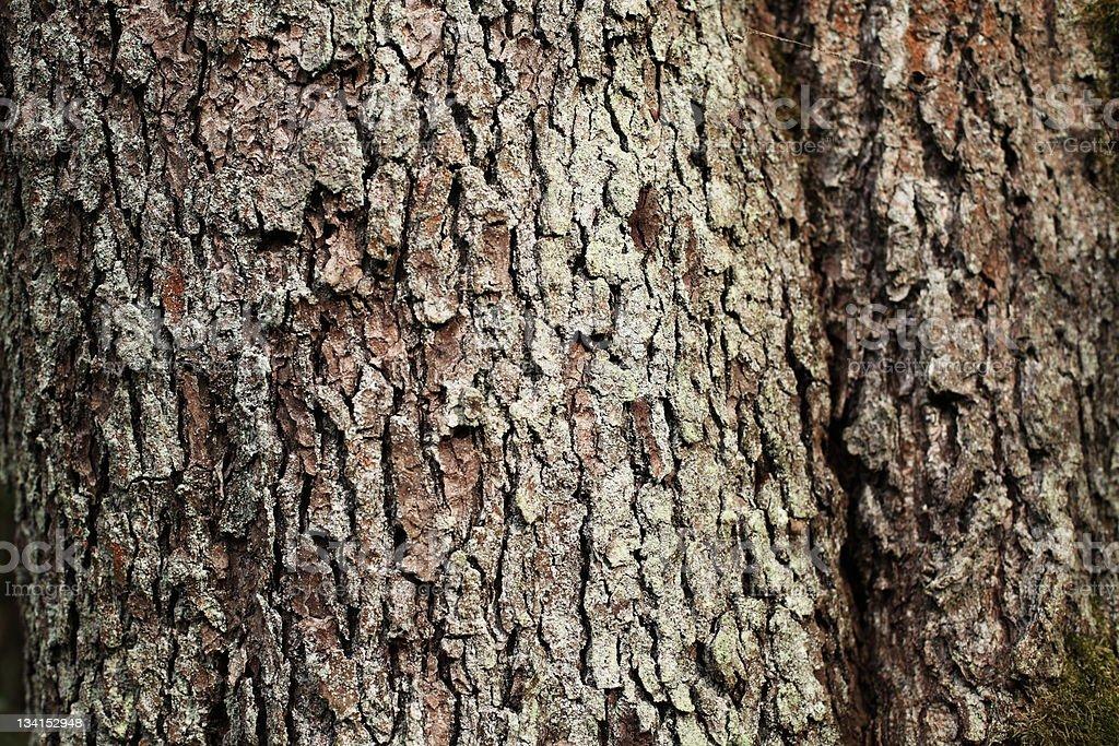 bark royalty-free stock photo