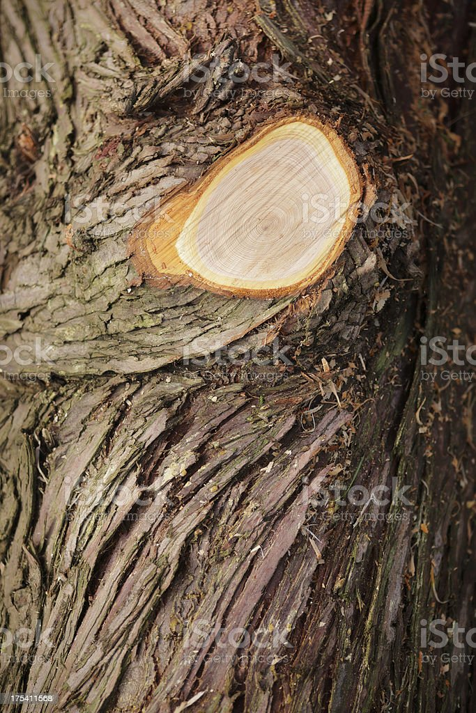 Bark royalty-free stock photo