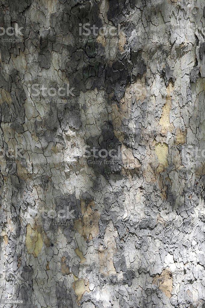 나무껍질 royalty-free 스톡 사진