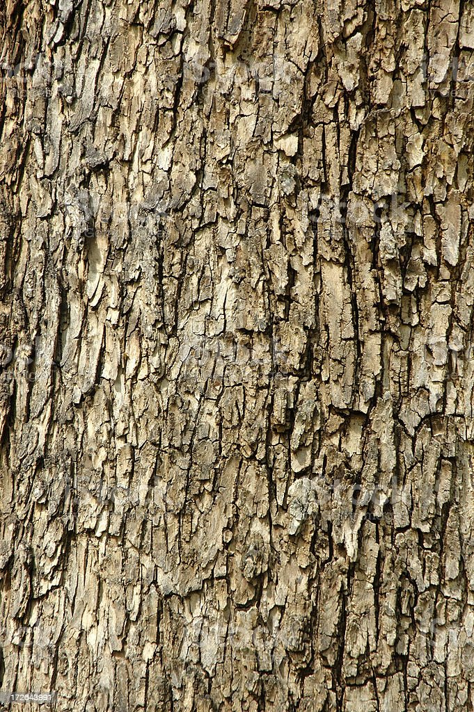 Bark texture background royalty-free stock photo