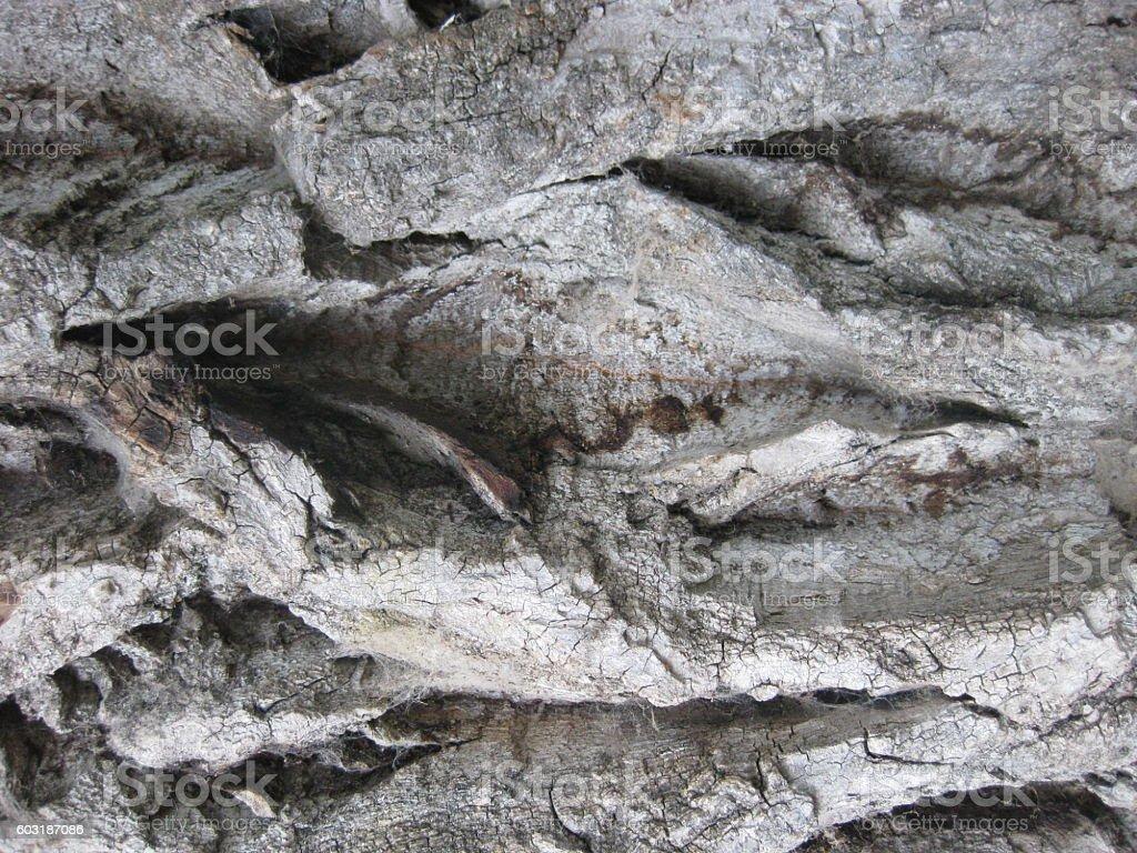 Bark texture. stock photo