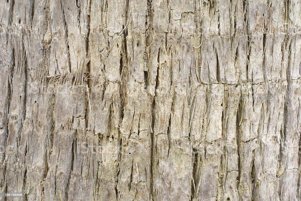 bark textured stock photo