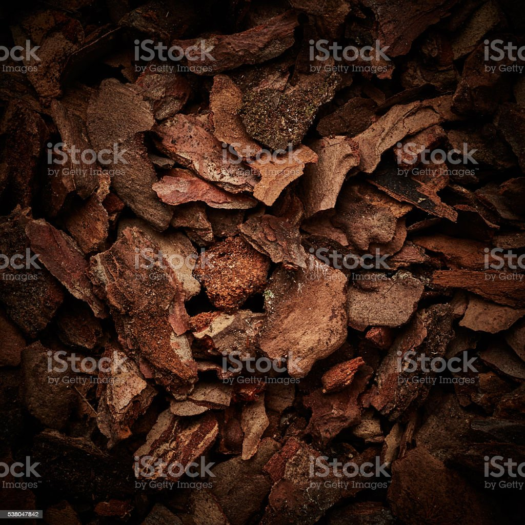 Bark tree background stock photo