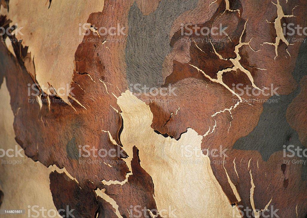 Bark tree royalty-free stock photo