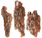 Bark tree. Set