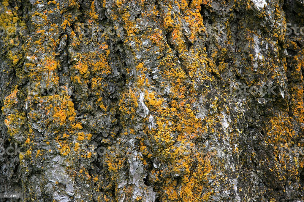 Bark with moss royalty-free stock photo
