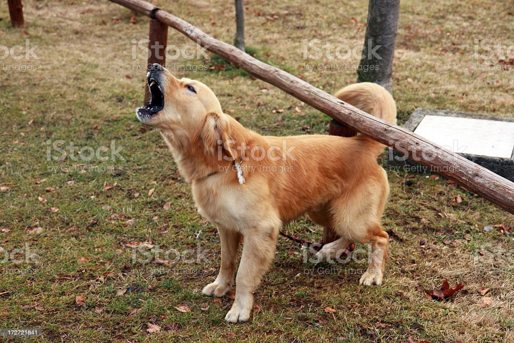 Barking dog on the grass in the park stock photo