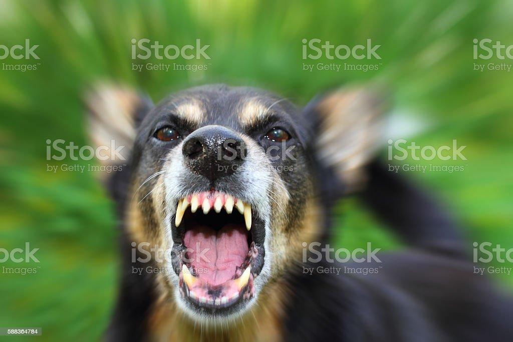 Barking dog stock photo