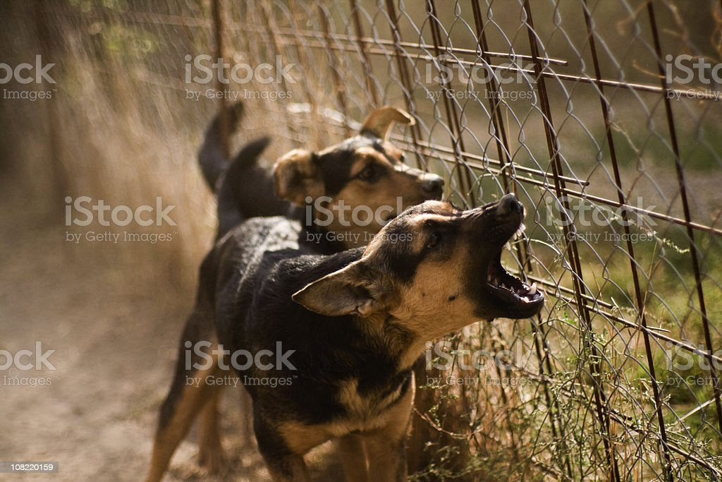 Barking Dogs royalty-free stock photo