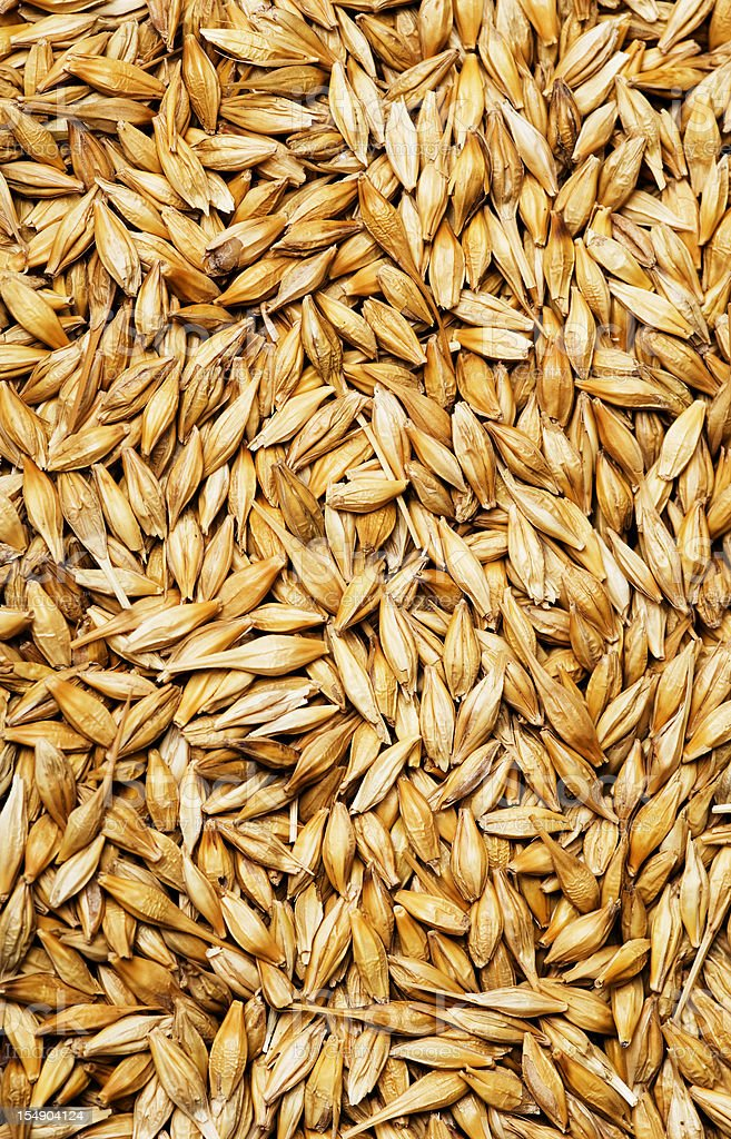 Barley background stock photo