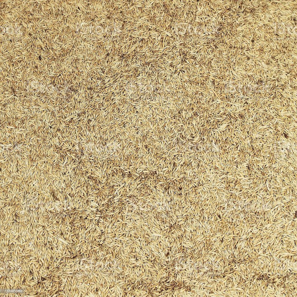 Barley Background stock photo
