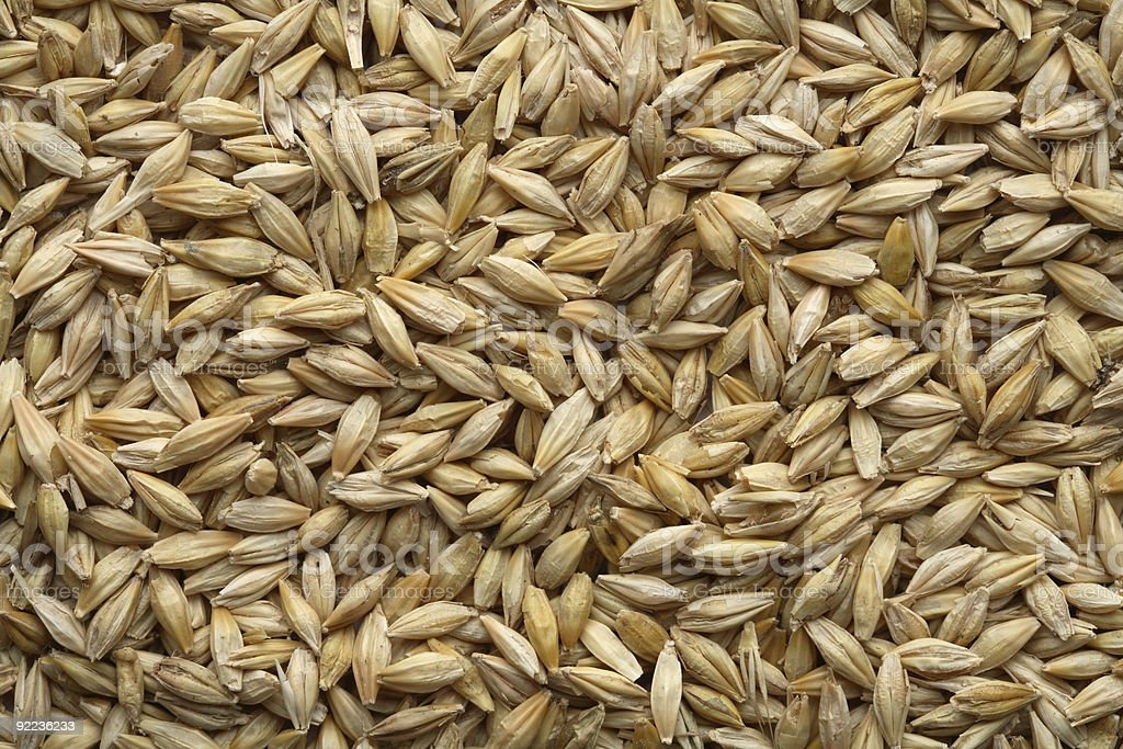 Barley covering the entire frame stock photo