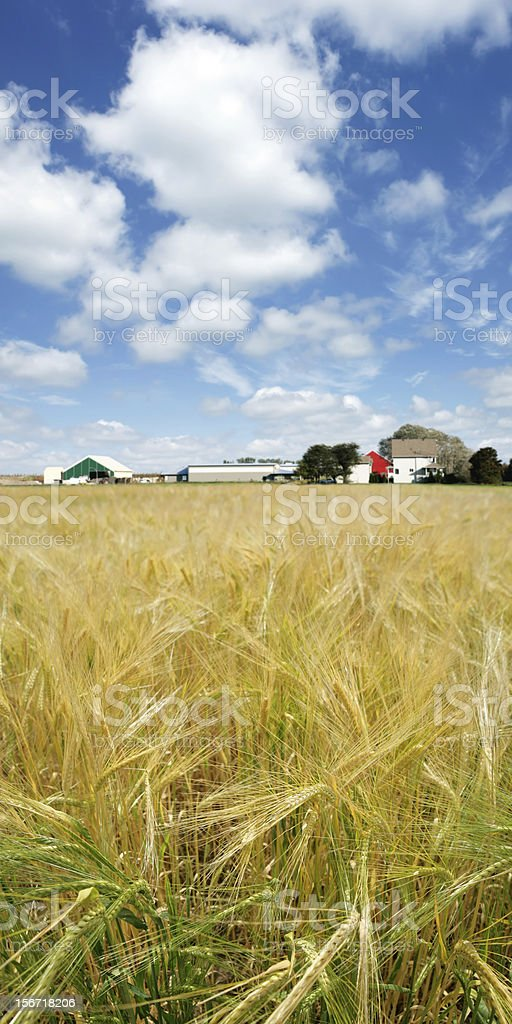 XXXL barley farm royalty-free stock photo