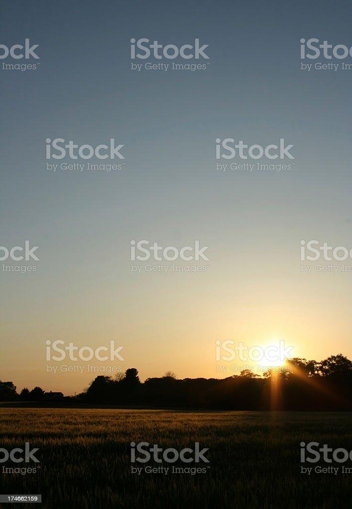 Barley Field Sunset royalty-free stock photo