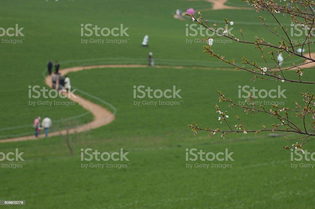 barley field walk stock photo