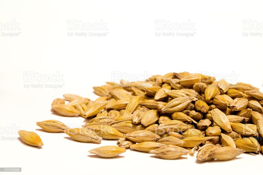Barley grain on a white background stock photo