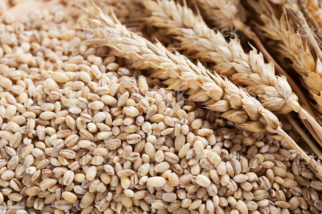 Barley Grains and Stalks stock photo