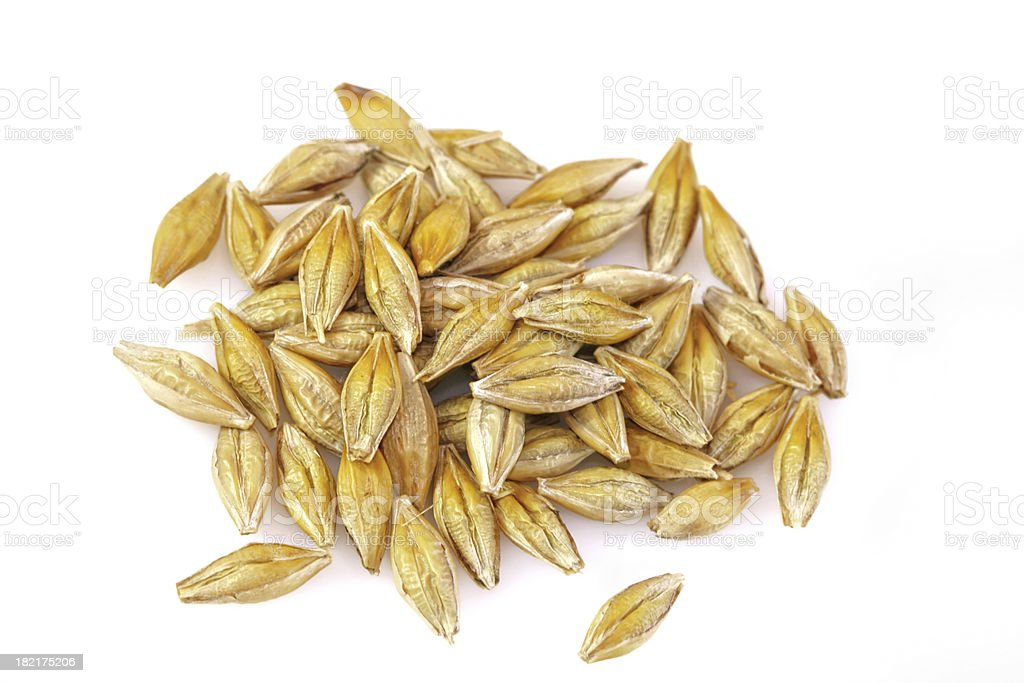 Barley grains on a white background stock photo