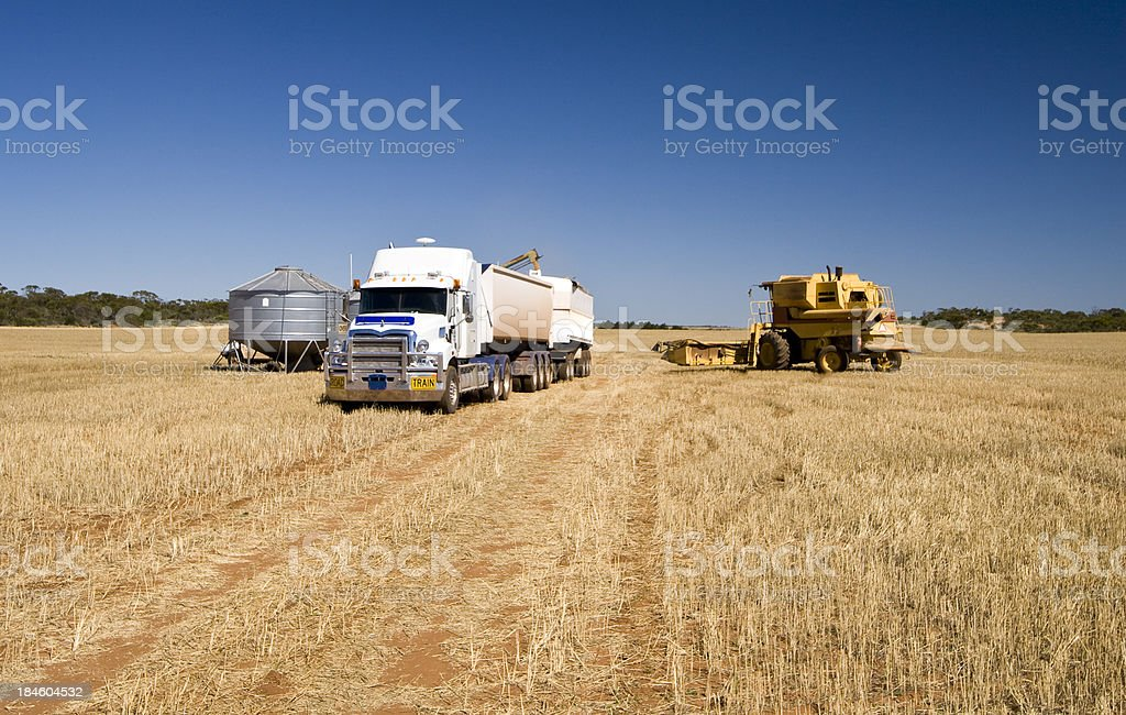 Barley Harvest stock photo