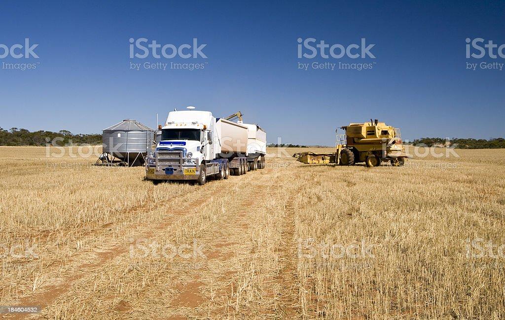 Barley Harvest stock photo