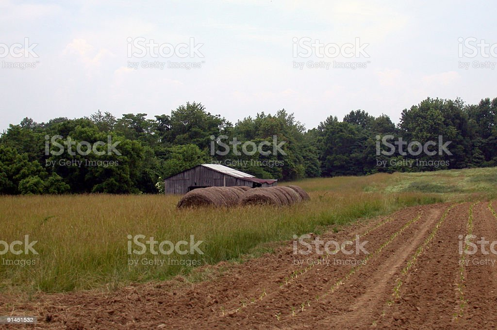 Barn and hay in a large field stock photo