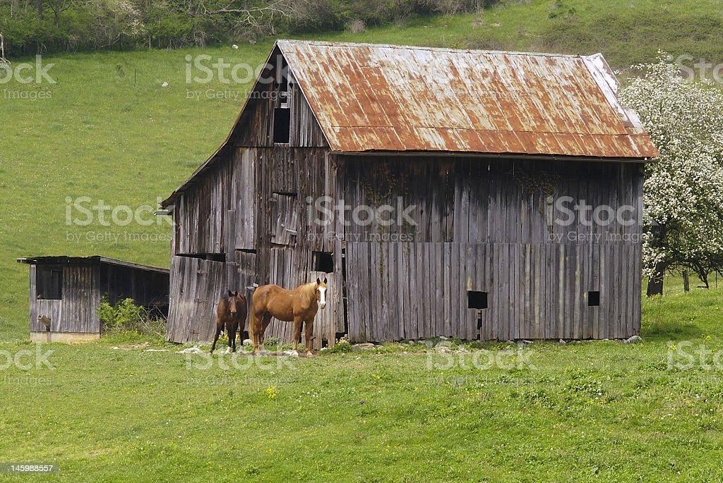 Barn and Horses royalty-free stock photo