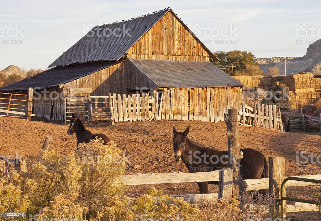Barn and Mules in Utah royalty-free stock photo
