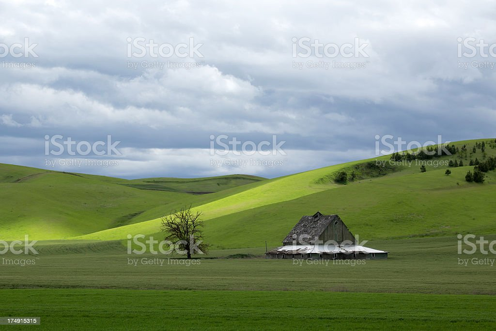 Barn and Tree in the Palouse royalty-free stock photo