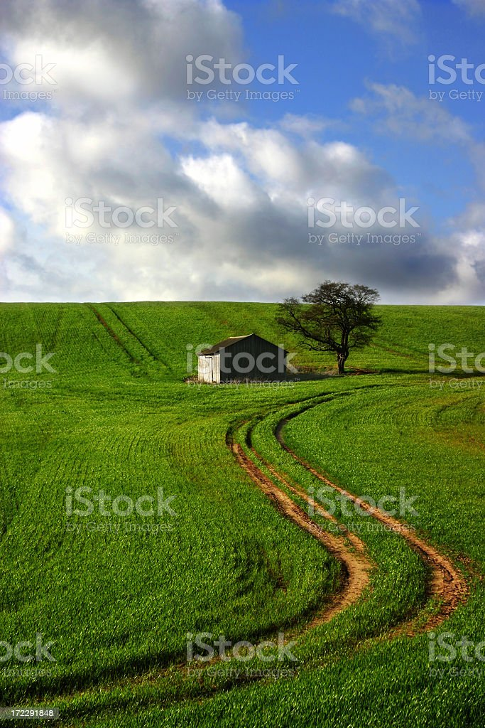 barn and tree on a field royalty-free stock photo