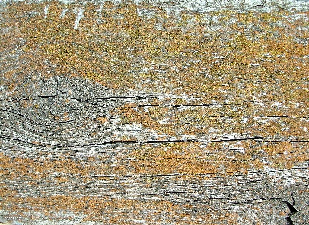 Barn Board Covered With Lichen stock photo
