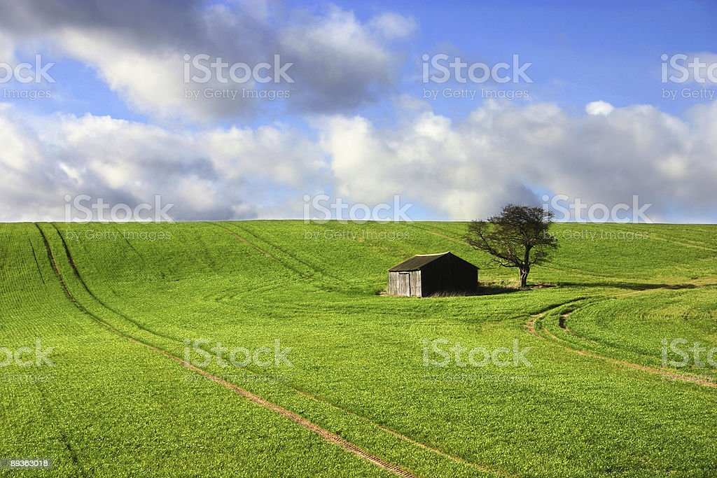 barn  by a lone tree royalty-free stock photo