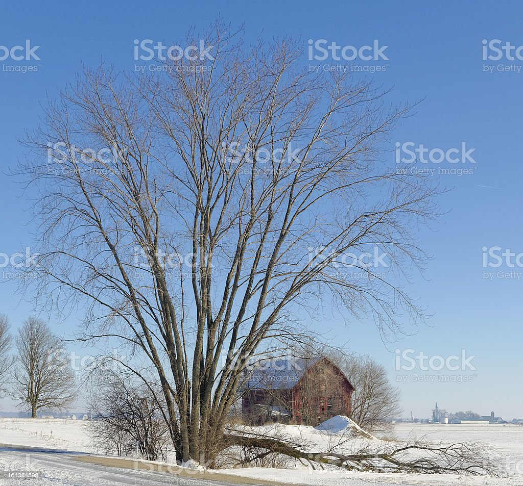 Barn Framed By Tree in the Snow royalty-free stock photo