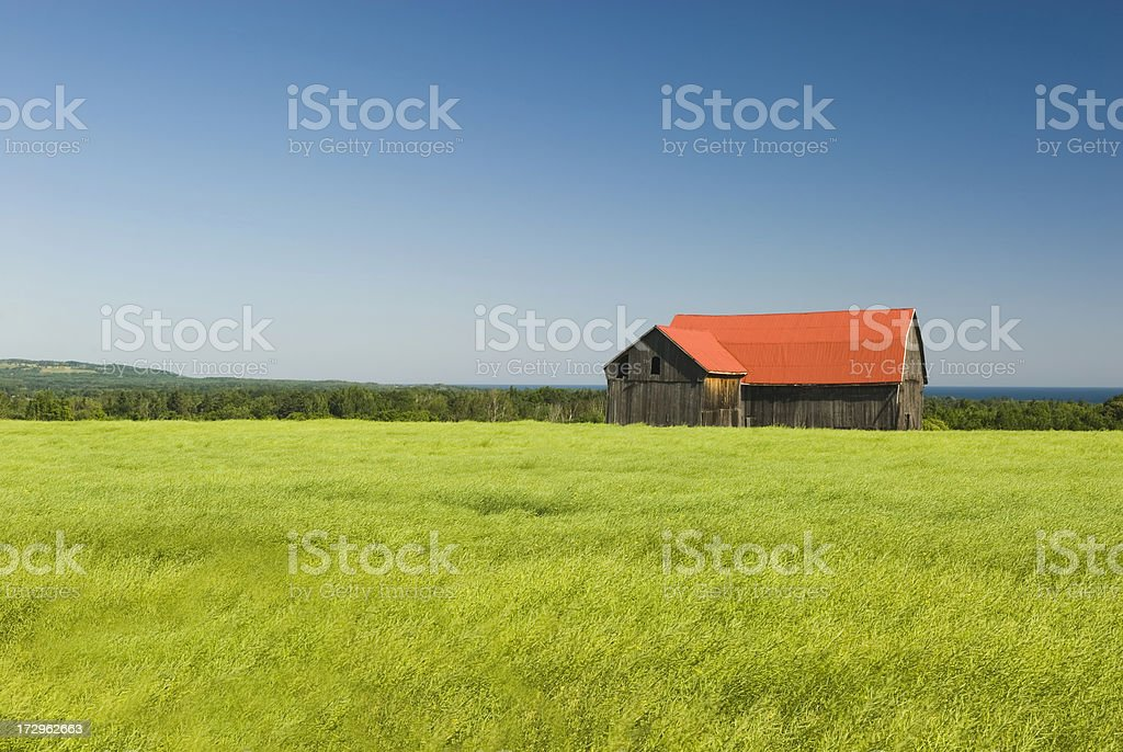 Barn in Canola (Rapeseed) field - IV royalty-free stock photo