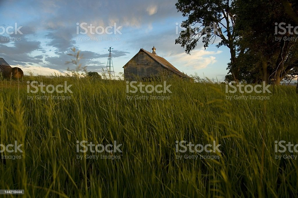 Barn in Summer Evening royalty-free stock photo