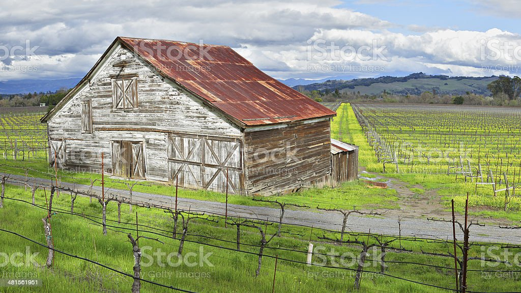 Barn in Vineyard royalty-free stock photo