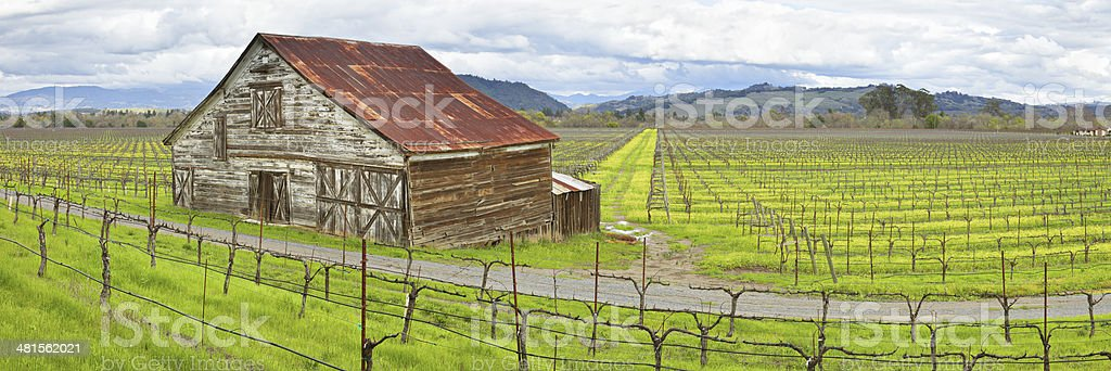 Barn in Vineyard stock photo