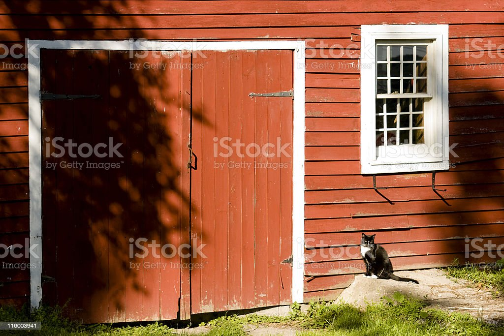 Barn with Cat stock photo