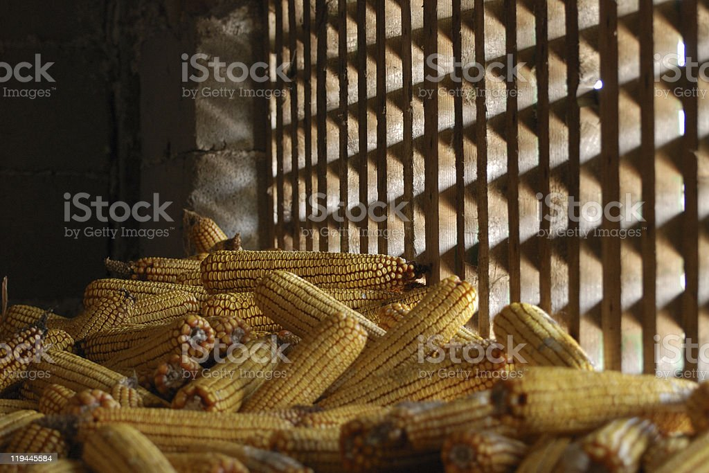 barn with corn cobs royalty-free stock photo