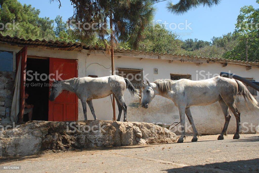 Barn with horses stock photo
