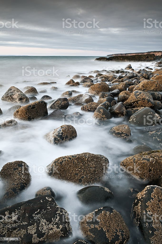 Barnacle Studded royalty-free stock photo