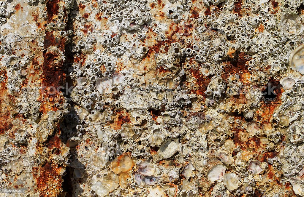 Barnacles on rusty metal background stock photo