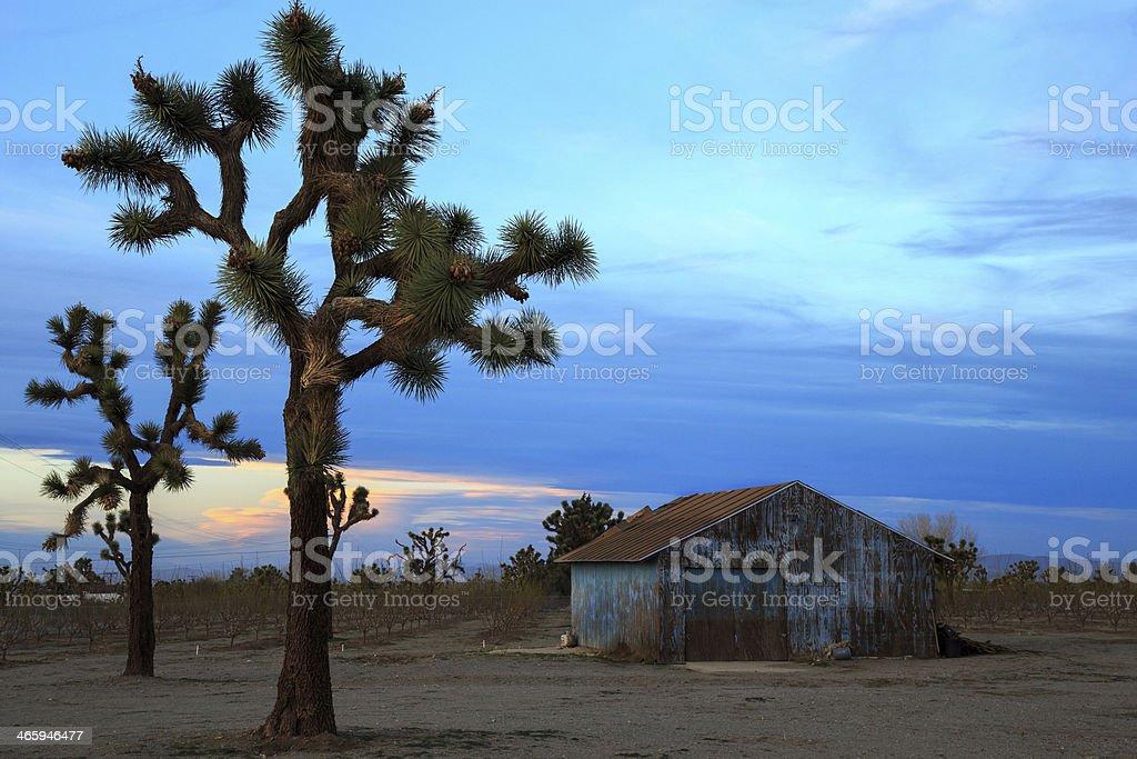 Barns and trees stock photo