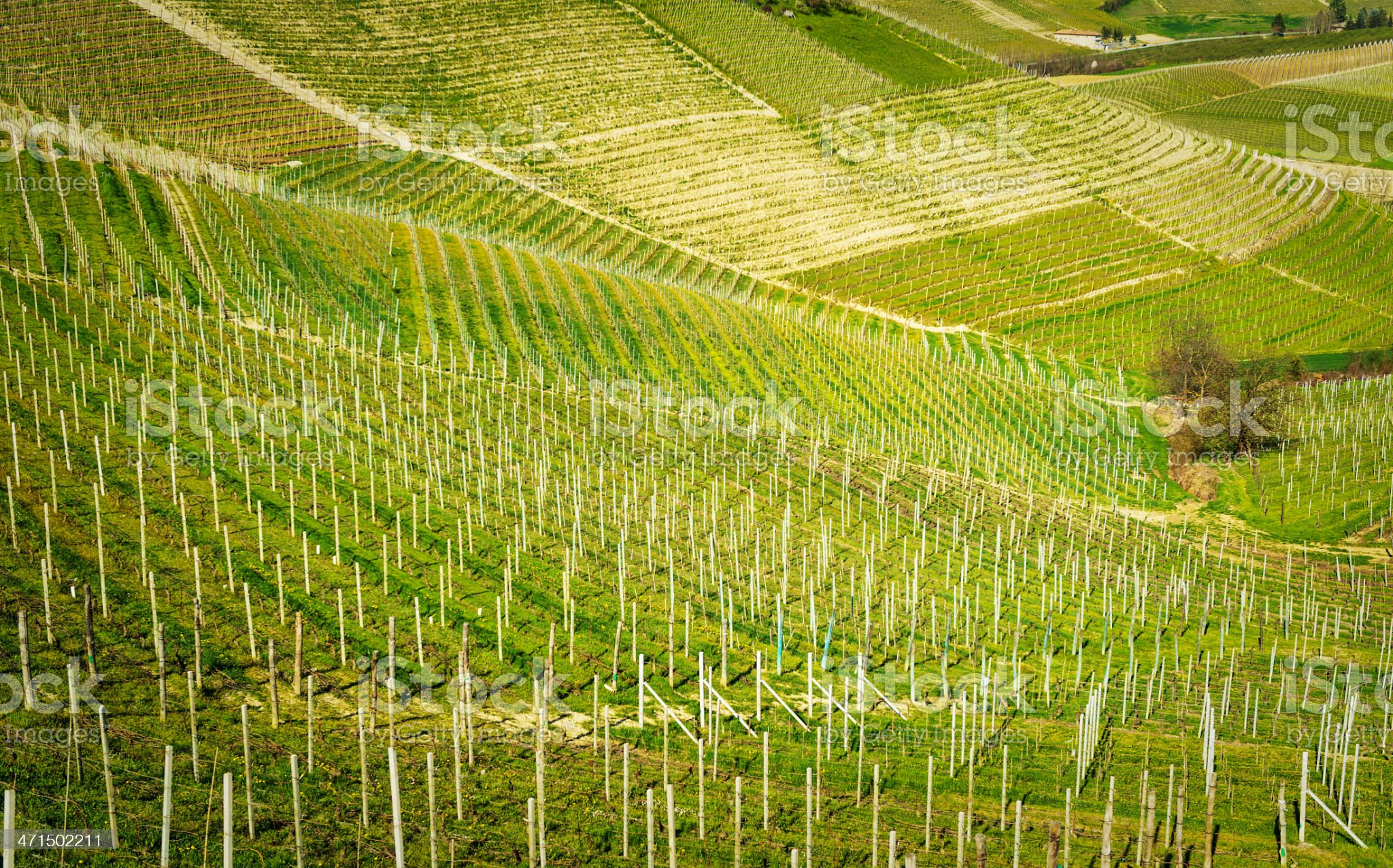 Barolo Vineyard royalty-free stock photo