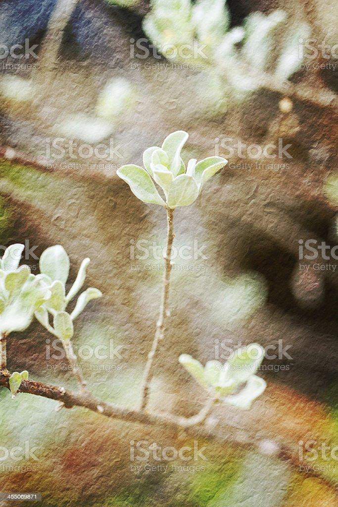 Barometer Bush 'leaf royalty-free stock photo