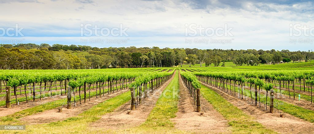 Barossa Valley winery stock photo