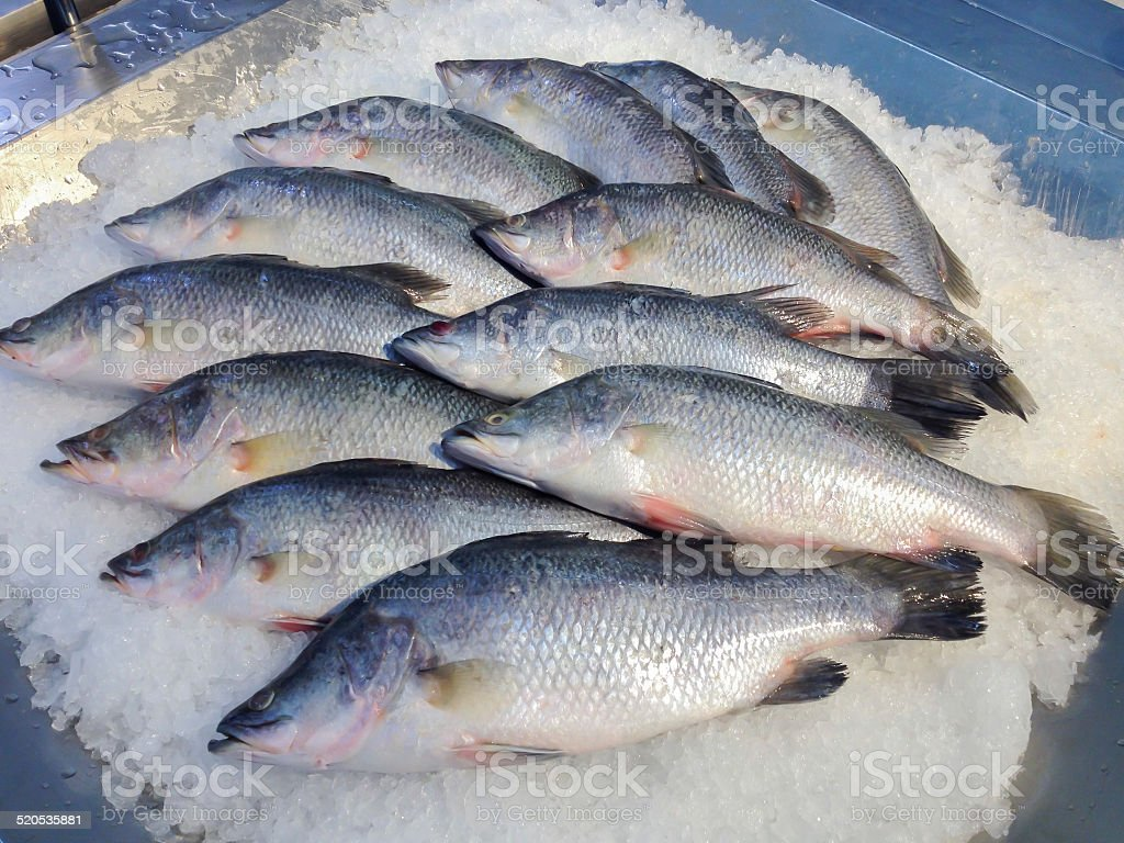 Barramundi Fish stock photo