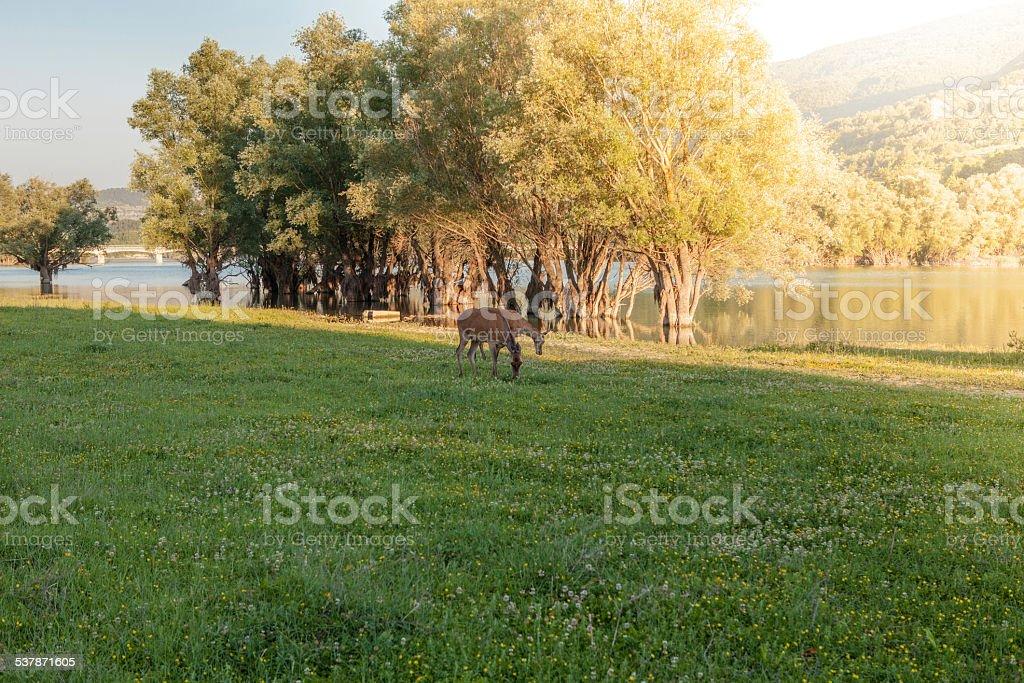 Barrea Lake, Abruzzo, Italy stock photo