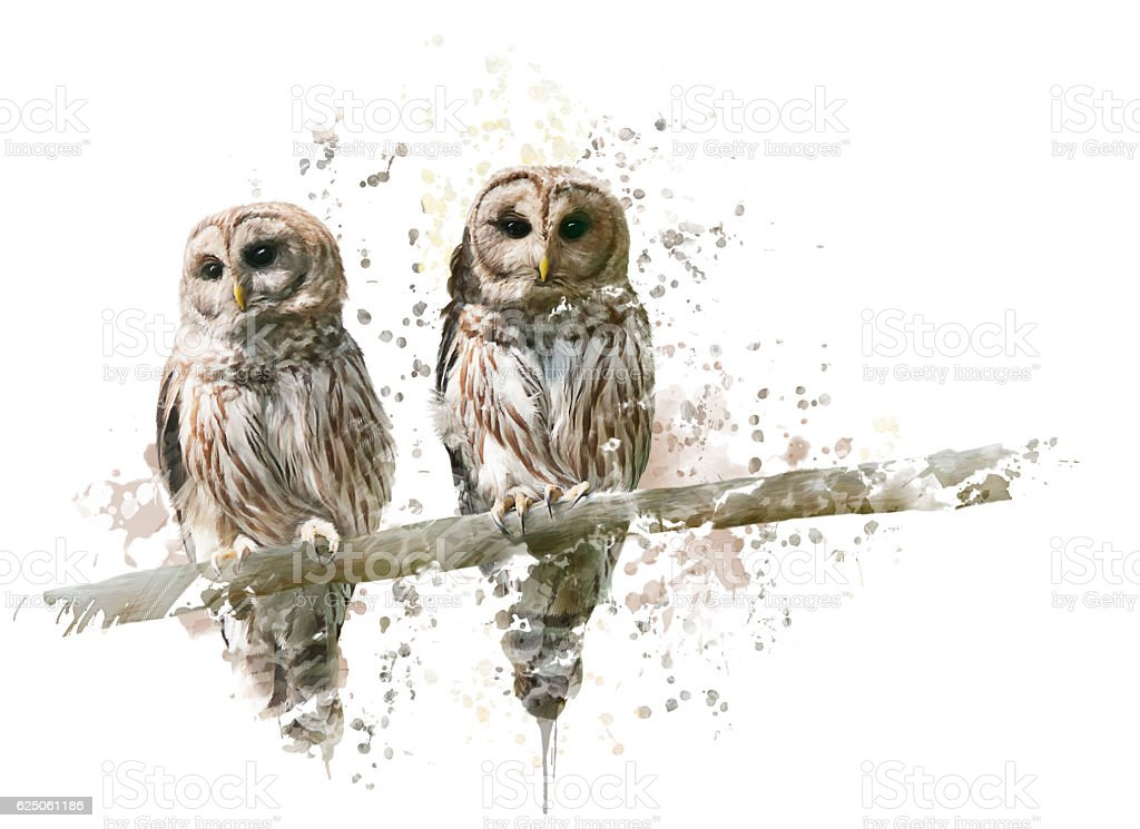 Barred Owls Watercolor stock photo