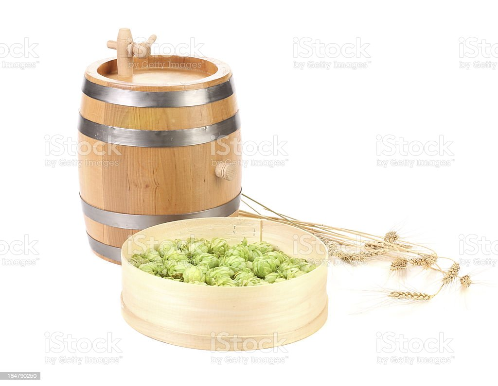 Barrel and sieve with hop. royalty-free stock photo